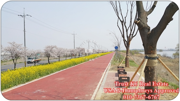 Anseong River Cycle Lane (4)