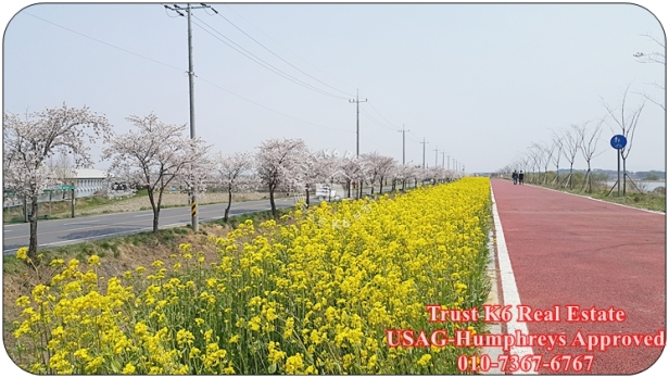 Anseong River Cycle Lane (5)