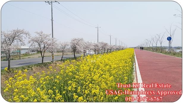 Anseong River Cycle Lane (5)